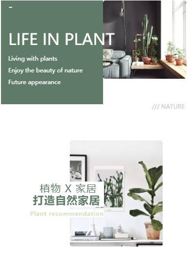 微信公众号绿植物家居打造自然家居绿色风格推文模板